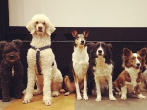 Kallelse till Östra Svealands Hundungdoms årsmöte 2020
